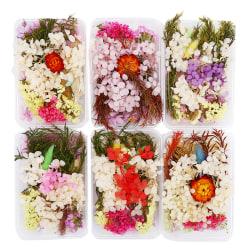 1 låda Slumpmässig blandning Naturliga torkade blommor Dekoration Epoximögel DI Multicolor