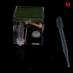 svart änka spindel liten insekt terrarium transparent reptil br M