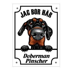 Plåtskylt Doberman pinscher Kikande hund skylt  White