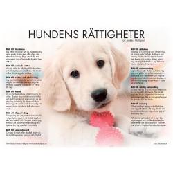Hundens rättigheter - poster 9789163906176