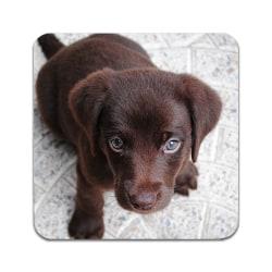 2 ST Hund Labrador Valp Underlägg