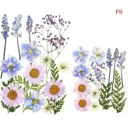 Pressade blommor Små torkade blommor Scrapbooking DIY konserverad P8