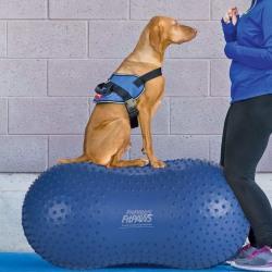 FitPAWS Balansboll för husdjur Trax Peanut 60 cm blå Blå