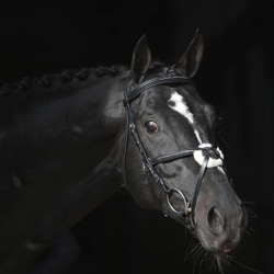 Covalliero Nosgrimma Cancun ponny svart Svart