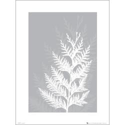 Exklusivt Art Print - Pressed leaf gray - Pressat blad, grå multifärg