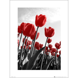 Exklusivt Art Print -Red Tulips - Röda tulpaner multifärg