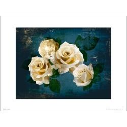 Exklusivt Art Print - Roses Midnight - Vita rosor i natten multifärg