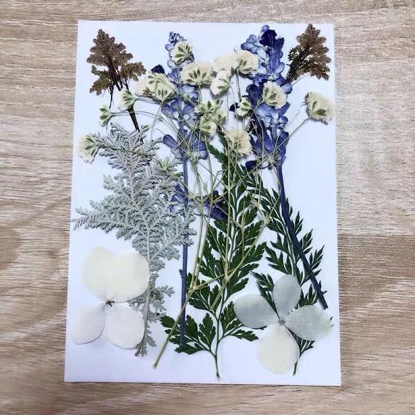 DIY torkad blomma för harts mögel Gör riktig blomma för harts fil
