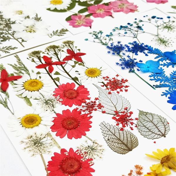 Pressade blommor Små torkade blommor Scrapbooking DIY konserverad