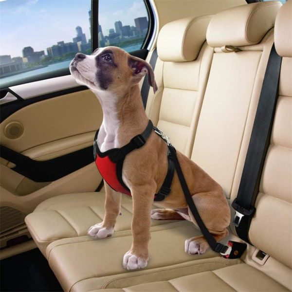Bilsele till hund Medium Röd