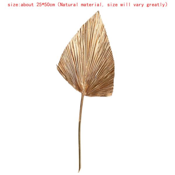 palm fläkt blad torkad blomma palm blad fönster mottagning fest konst H