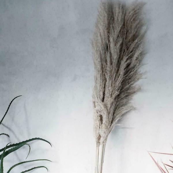 1 Stycken Naturligt Torkat för Pampasgräsbukett för Hemfest Grå