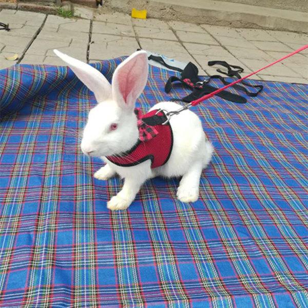 Mesh andningsbar husdjur katt hund sele väst leasher kanin brös Blå L