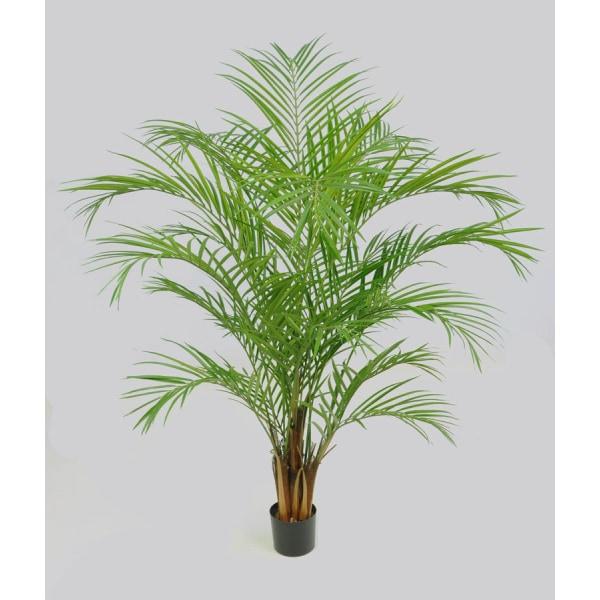 Areca Palm - 230cm