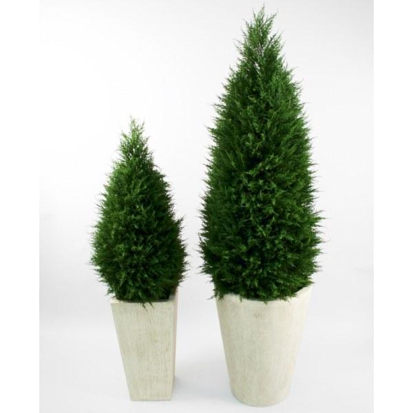 Cypressus (Cypress) - 110cm