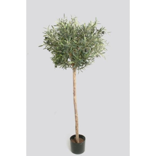 Olive Tree 110cm