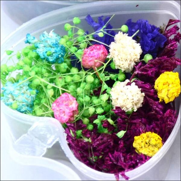 Naturliga torkade blommor med låda för diy hartssmycken som gör N