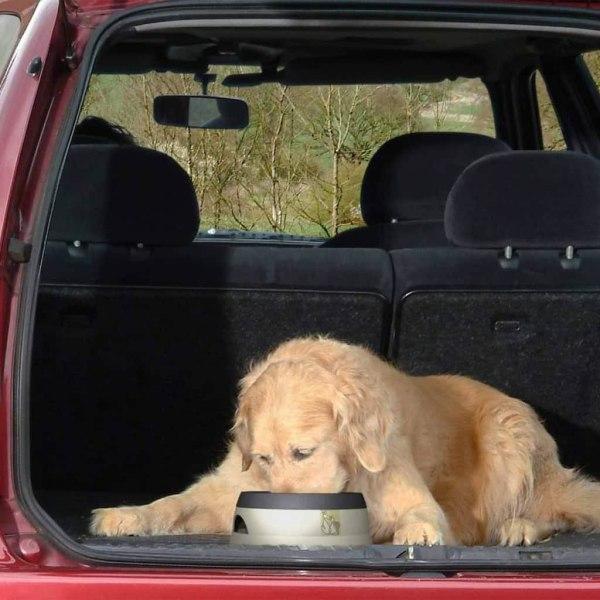 Road Refresher Spillfri vattenskål för husdjur liten grå SGRR Grå
