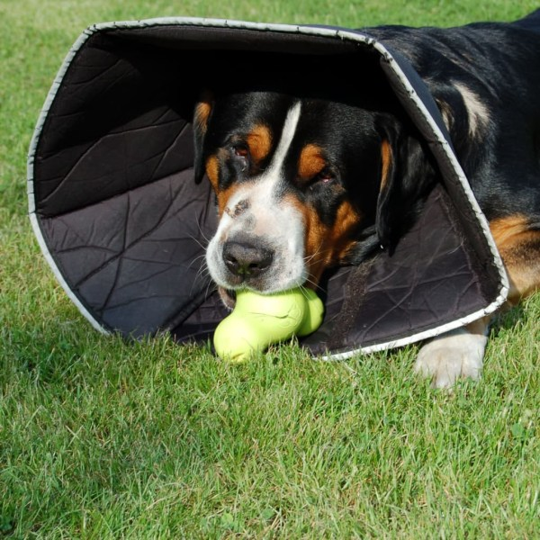 All Four Paws Hundkrage Comfy Cone M 20 cm svart Svart