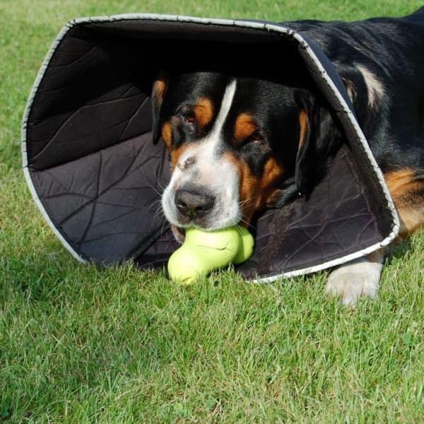 All Four Paws Hundkrage Comfy Cone L 25 cm svart Svart