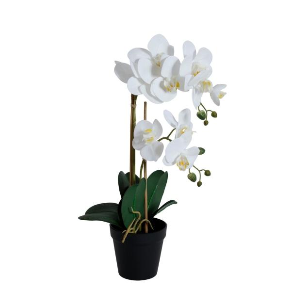 Orkidea valkoinen 2-varsinen 54 cm White